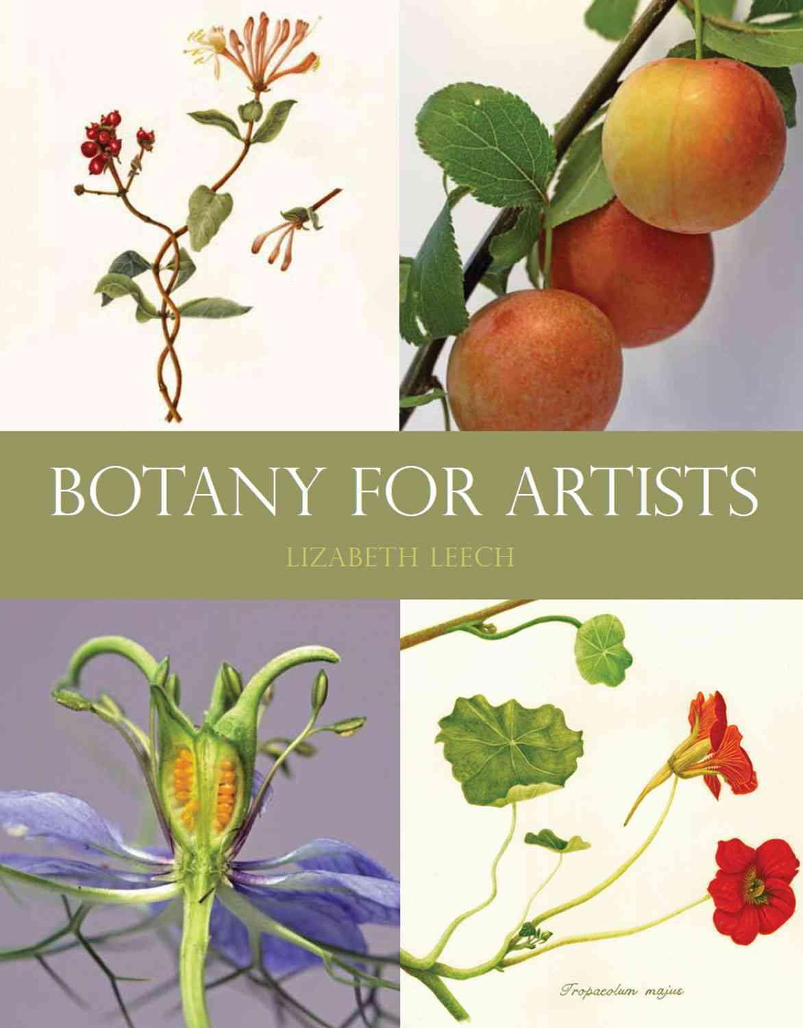 Botany for Artists By Leech, Lizabeth